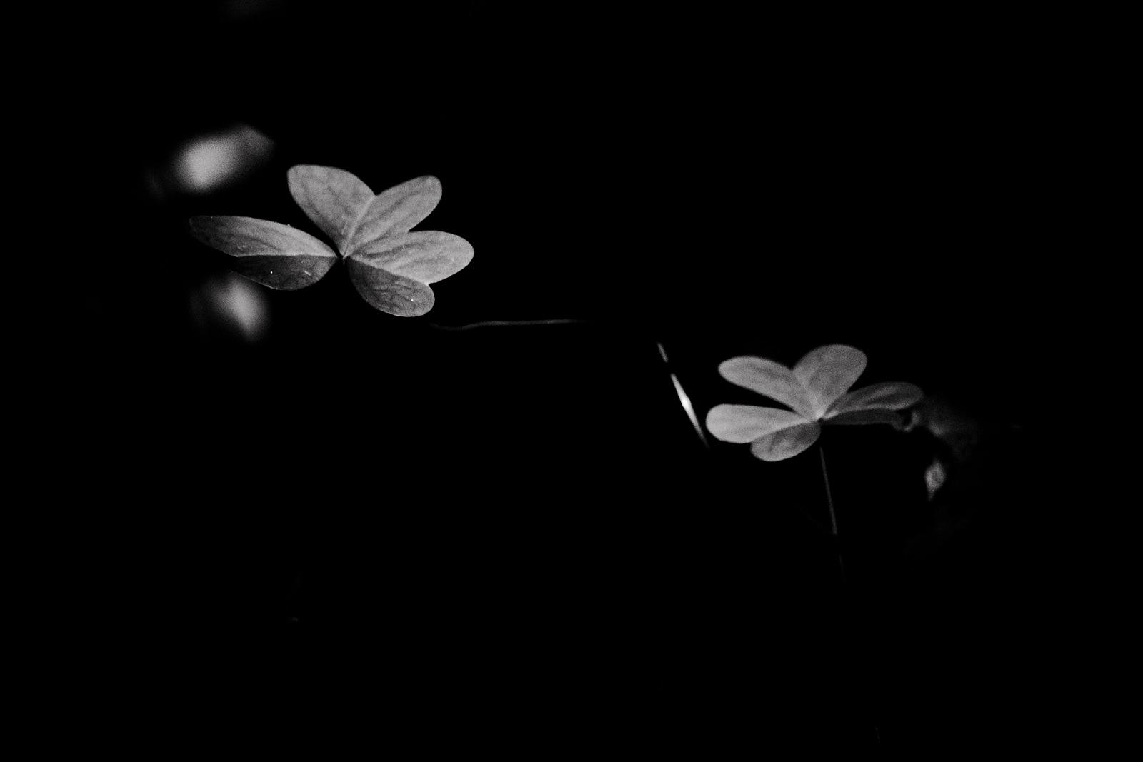 fotografo en algeciras